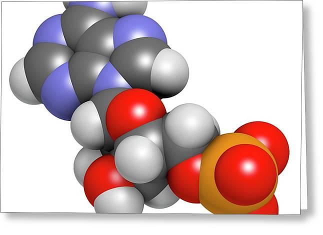 Adenosine Monophosphate Molecule Greeting Card