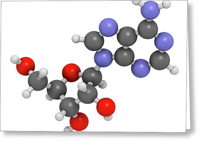 Adenosine Purine Nucleoside Molecule Greeting Card by Molekuul