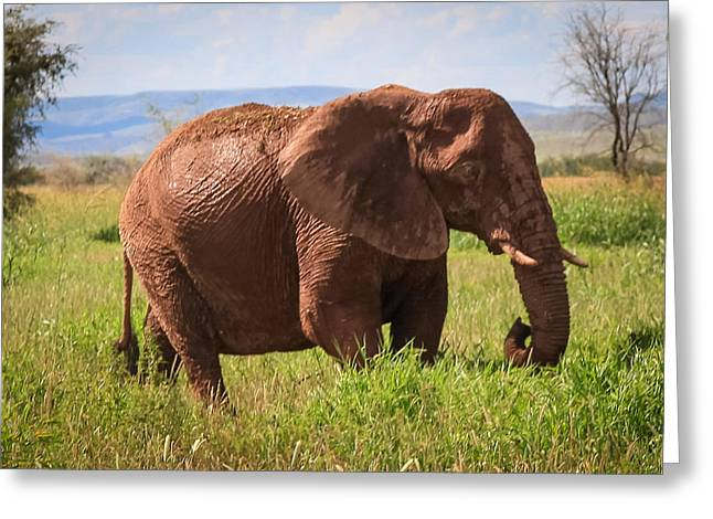 African Desert Elephant Greeting Card