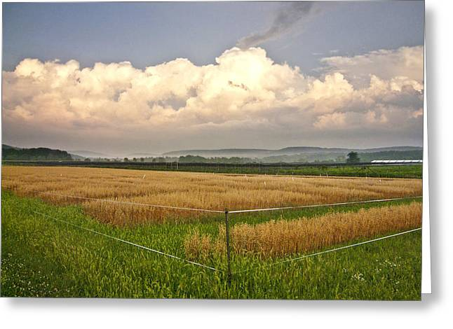 After The Storm Greeting Card by Stan Bowman