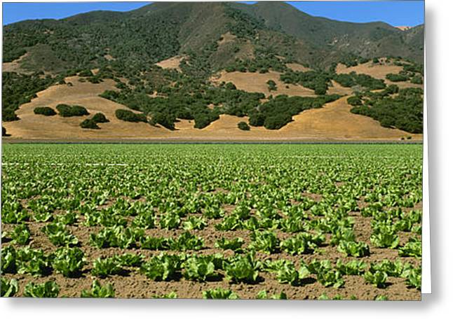 Agriculture - A Field Of Early Growth Greeting Card by Timothy Hearsum