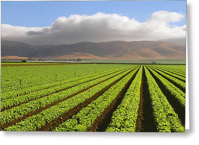 Agriculture - A Mature Green Leaf Greeting Card by Timothy Hearsum