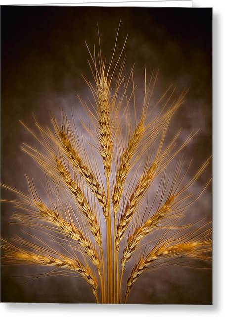 Agriculture - Arrangement Of Mature Greeting Card by John Wigmore