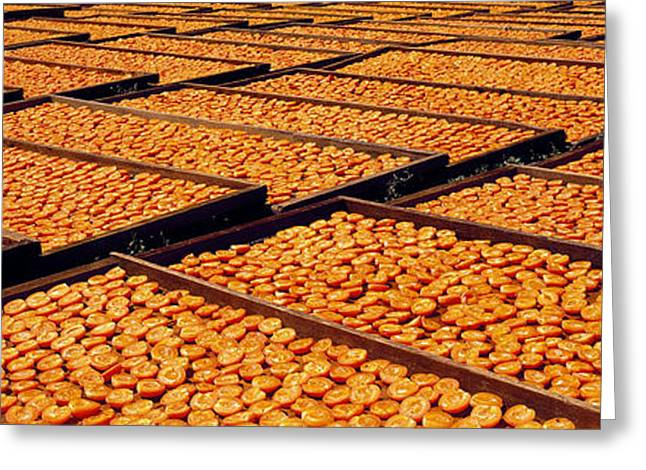 Agriculture - Blenheim Apricots Greeting Card by Randy Vaughn-Dotta