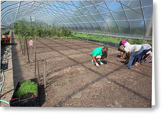 Agriculture Students Planting Onions Greeting Card by Jim West