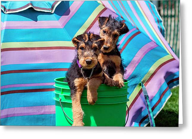 Airedale Puppies In A Green Bucket (mr Greeting Card by Zandria Muench Beraldo