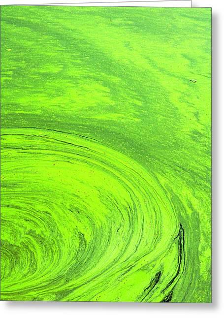 Algae On The Water, Indhar Lake Greeting Card