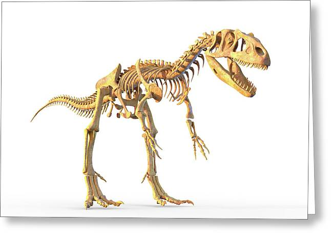 Allosaurus Skeleton Greeting Card by Roger Harris/science Photo Library