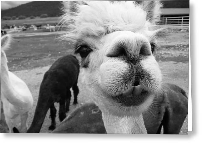 Alpaca Face Greeting Card