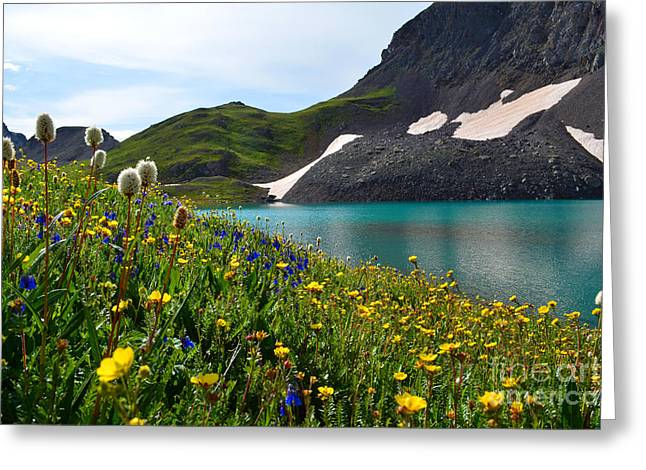 Alpine Flowers Greeting Card