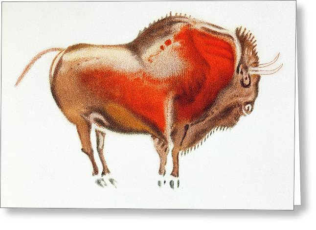 Altamira Bison Cave Painting Greeting Card by Paul D Stewart