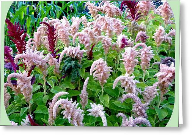 Amaranth Greeting Card by Will Borden
