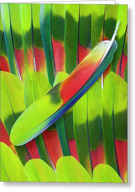 Amazon Parrot Tail Feather Design Greeting Card by Darrell Gulin