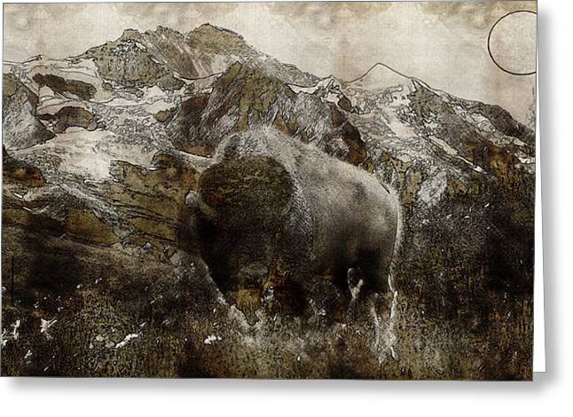 American Bison In The Rockies Greeting Card by Adam Asar