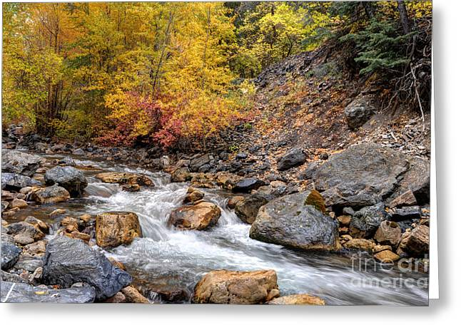 American Fork Canyon Creek In Autumn - Utah Greeting Card by Gary Whitton