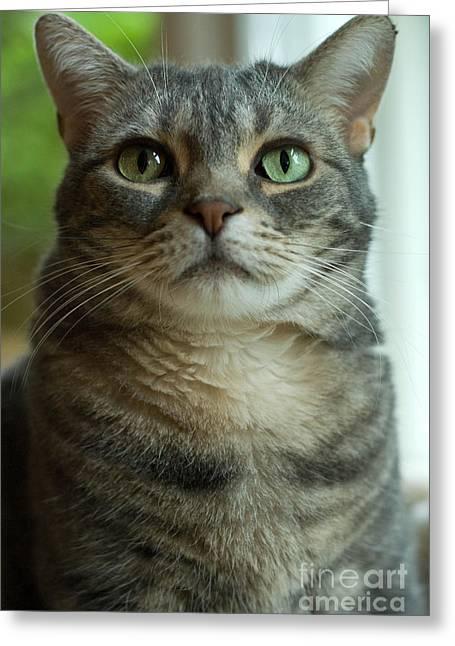 American Shorthair Cat Profile Greeting Card