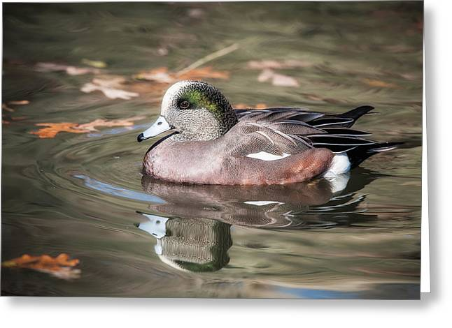 Greeting Card featuring the photograph American Wigeon by Tyson and Kathy Smith