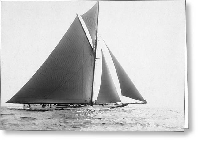 America's Cup, 1901 Greeting Card