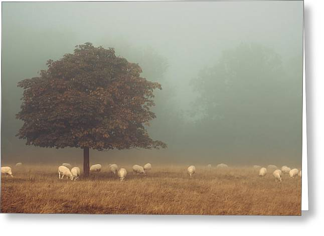 Amongst The Flock On An Autumn Morning Greeting Card by Chris Fletcher
