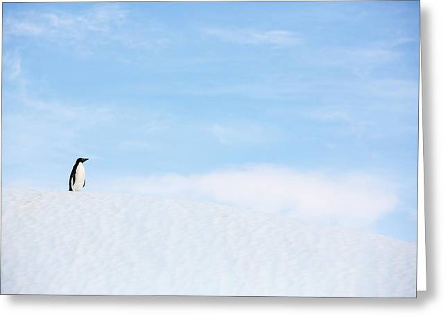 An Adelie Penguin On An Iceberg Greeting Card