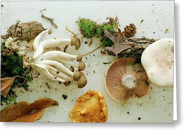 An Assortment Of Mushrooms Greeting Card