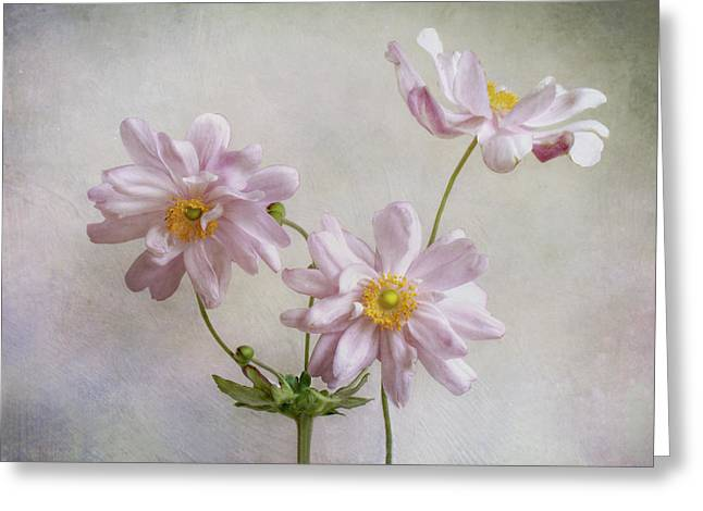 Anemones Greeting Card by Mandy Disher