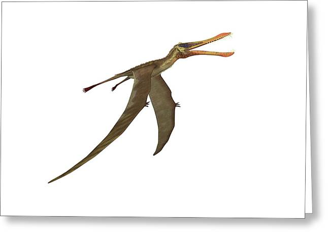 Anhanguera Pterosaur Greeting Card by Friedrich Saurer