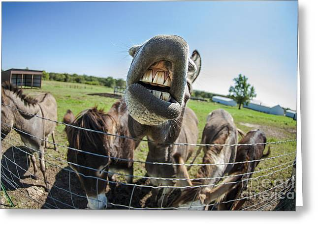 Animal Personalities Silly Talking Donkey With Whiskers Greeting Card by Jani Bryson