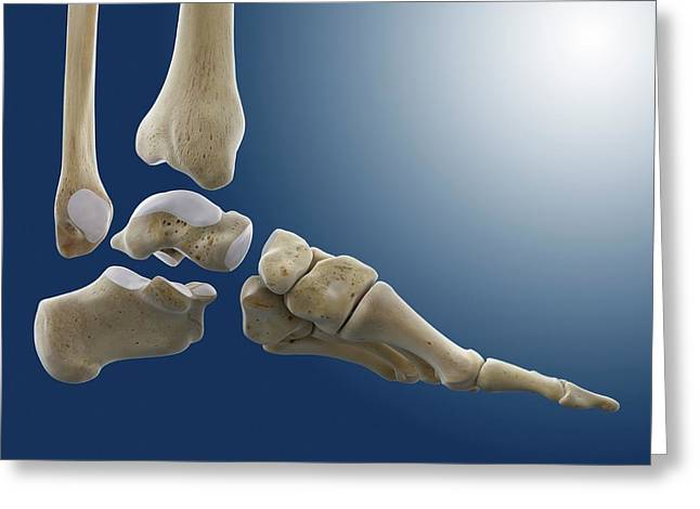 Ankle Joint Anatomy Greeting Card