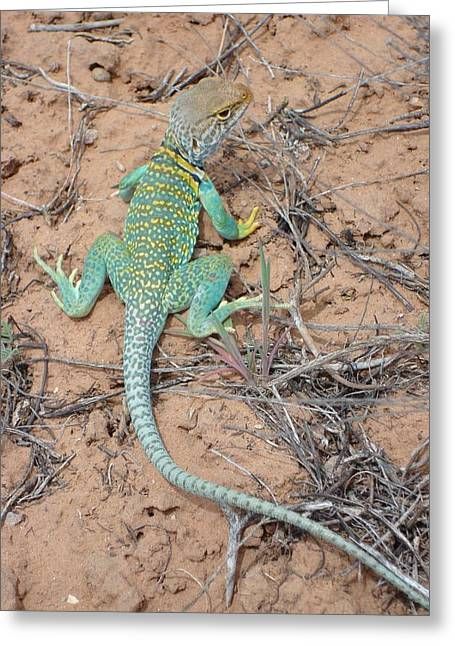 Another Collared Lizard Greeting Card
