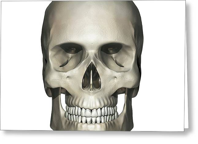Anterior View Of Human Skull Anatomy Greeting Card