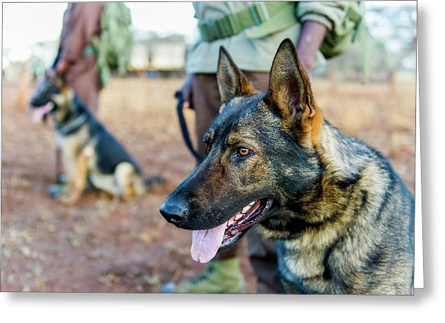 Anti-poaching Dog Patrol Greeting Card