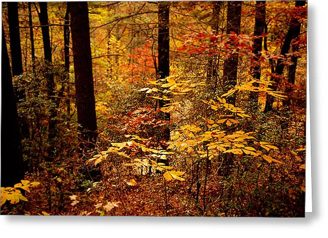 Appalachian Fall Greeting Card