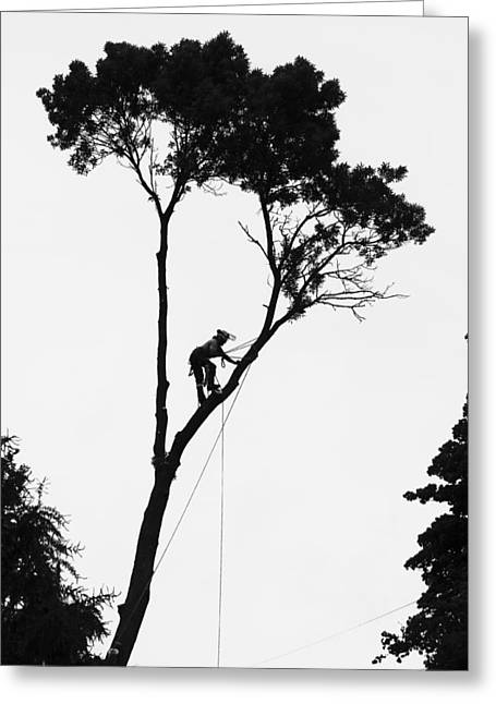 Arborist At Work Greeting Card