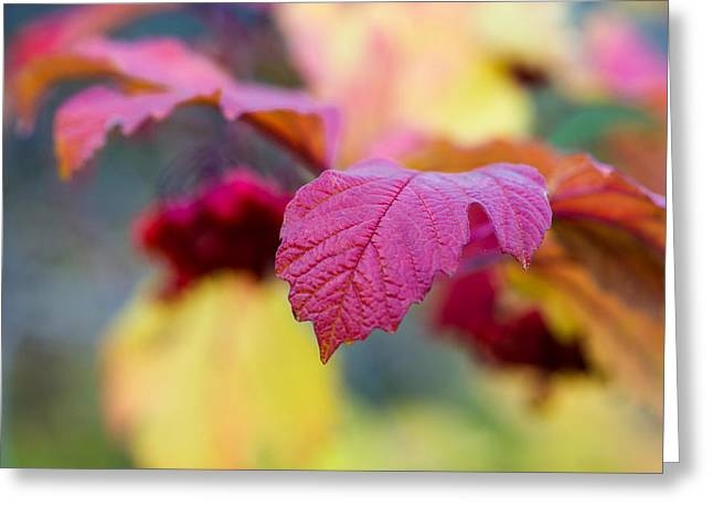 Arrowwood Leaf - Featured 3 Greeting Card