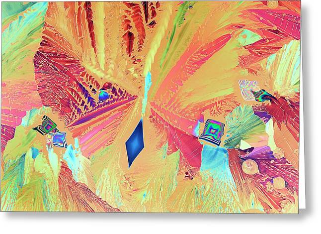 Asparagine Crystals Greeting Card by Steve Lowry