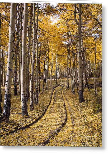 Aspen Road Co Greeting Card by Sean Bagshaw