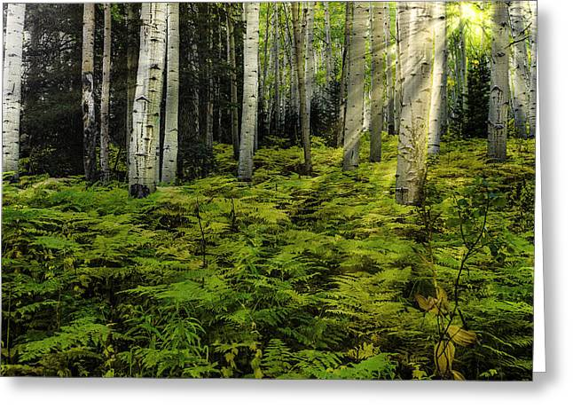 Aspen Sunrise Greeting Card