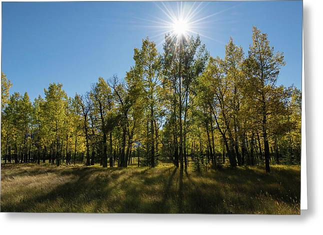 Aspen Trees In Autumn, Banff National Greeting Card by Panoramic Images
