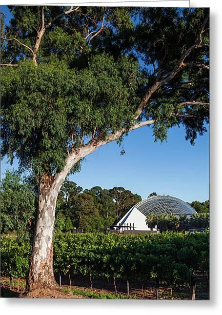 Australia, Adelaide, Adelaide Botanic Greeting Card