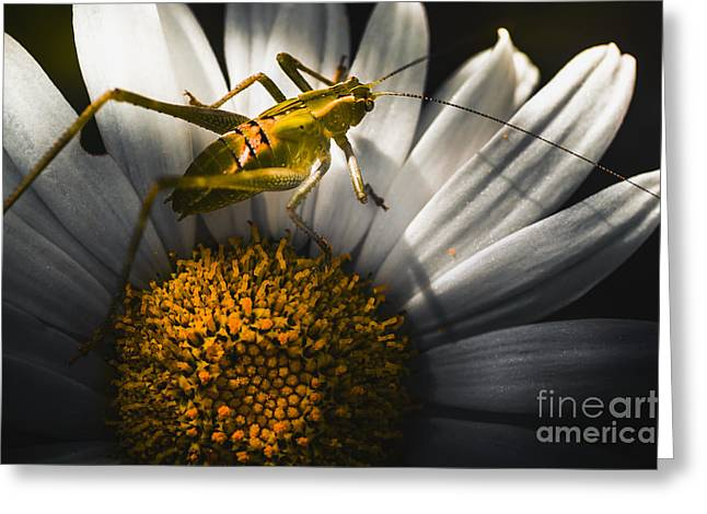 Australian Grasshopper On Flowers. Spring Concept Greeting Card by Jorgo Photography - Wall Art Gallery