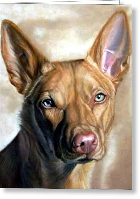 Australian Kelpie Dog Portrait Greeting Card by Olde Time  Mercantile