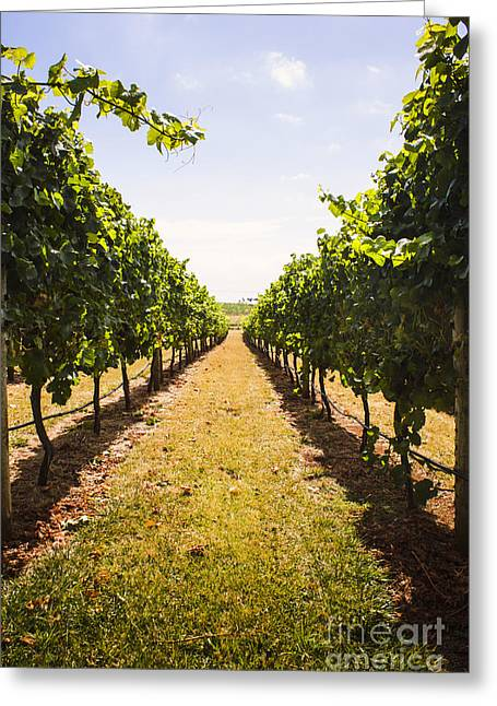 Australian Winery Landscape Of Vineyard Grapes Greeting Card by Jorgo Photography - Wall Art Gallery