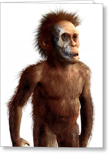 Australopithecus Afarensis, Artwork Greeting Card by Science Photo Library