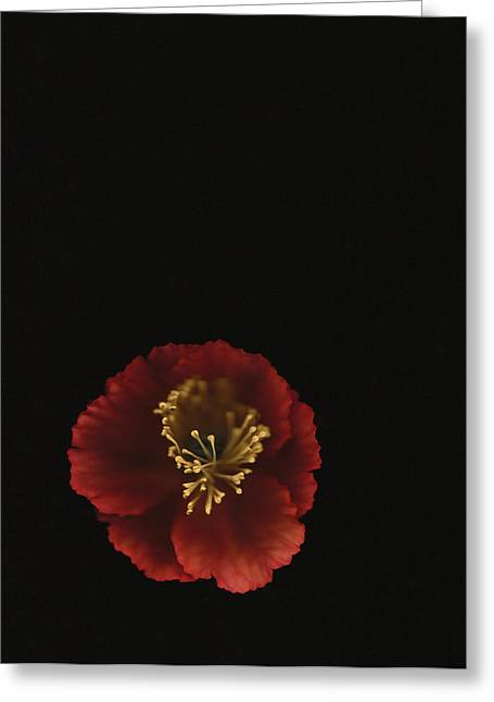 Autographic Poppy - Color Greeting Card