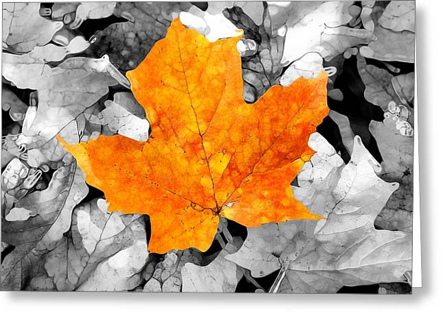 Autumn Abstract Greeting Card by Dan Sproul