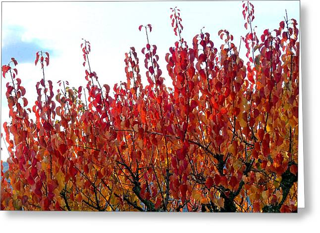 Autumn Apricot Tree Greeting Card