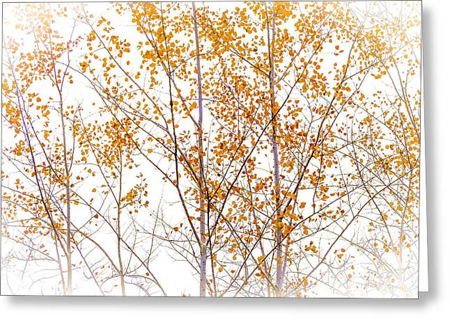 Autumn Birch Greeting Card by Barbara Smith