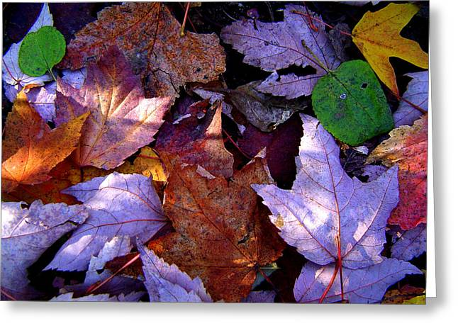Autumn Groundcover Greeting Card