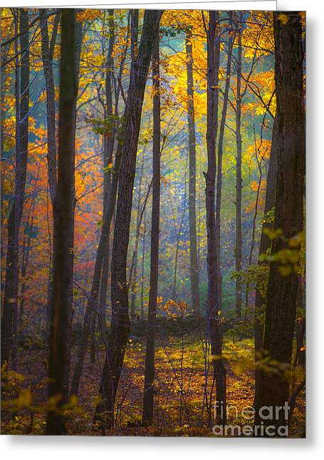 Autumn In Connecticut Greeting Card by Diane Diederich